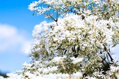 Goldenrod kwiat miękkiej części styl w pastelowym brzmieniu Obrazy Royalty Free