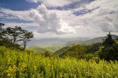Goldenrod kwiatu krajobrazu grani Błękitny Parkway NC Obrazy Stock