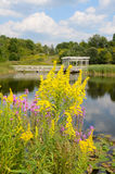Goldenrod and Loosestrife blurred background Houston Pond Cornel. Houston Pond in background of Goldenrod and Loosestrife at Cornell Botanical Gardens Ithaca Royalty Free Stock Image
