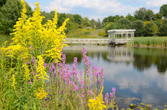 Goldenrod and Loosestrife in front of Houston Pond Cornell. Houston Pond in background of Goldenrod and Loosestrife at Cornell Botanical Gardens Ithaca NewYork Royalty Free Stock Photos