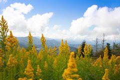 Goldenrod and Mountains on Round Bald royalty free stock photos