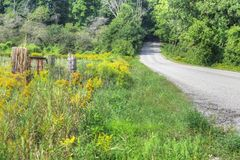 Goldenrod by roadside on early autumn day Royalty Free Stock Photos