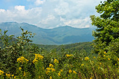 Goldenrods Fog Blue Ridge Mountains WNC Meadow Stock Photo