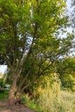 12 2010 golders зеленеют парк принятый сентябрь london ландшафта Стоковое Изображение RF