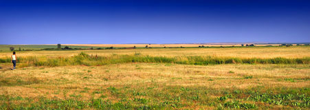 Goldfeld panoramisch Lizenzfreie Stockbilder