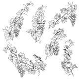 Goldfinch нарисованный рукой на виноградине разветвляет эскиз иллюстрация штока