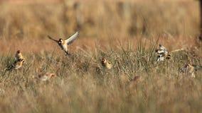 Goldfinch birds in field. Closeup of Goldfinch birds feeding on plants in field Royalty Free Stock Image