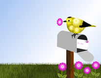 Goldfinch and Open Mailbox Royalty Free Stock Photography