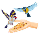 Goldfinch and titmouse are flying over hand with cereals Royalty Free Stock Photography