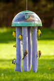 Goldfinches at bird feeder Royalty Free Stock Photos