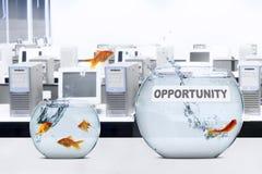 Goldfisch, der zum größeren Aquarium springt Lizenzfreie Stockbilder