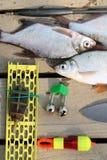 Goldfisch fiel in das Netz Lizenzfreie Stockbilder