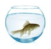 goldfisch in einem glas mit wei em hintergrund stockfoto. Black Bedroom Furniture Sets. Home Design Ideas