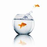 Goldfisch springen stockbilder