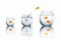 Goldfisch springen lizenzfreies stockbild