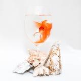 Goldfisch und Korallen Lizenzfreies Stockfoto