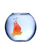 Goldfische stockfotos