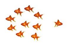 Goldfische Stockfotografie