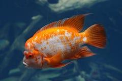Bunte unterwasserwelt stock fotos melden sie sich for Bunte goldfische
