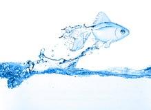 Goldfische, die über blaues Wasser des Schrägstrichs springen stockfotografie