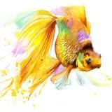 Goldfische T-Shirt Grafiken, Goldfischillustration mit Spritzenaquarell maserten Hintergrund Stockfotos