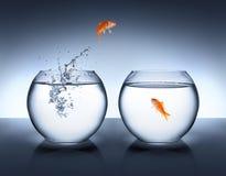 Goldfischherausspringen der wasser- Liebe Stockbild
