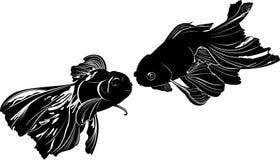 Goldfischkarpfen Stockfoto