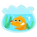 Goldfischverletzung in der Schüsselillustration Stockfotos