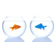 Goldfish étranger et goldfish normal photographie stock