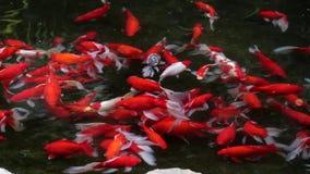 Goldfish και μια πάπια φιλμ μικρού μήκους