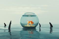 Goldfish σε ένα ενυδρείο Στοκ φωτογραφίες με δικαίωμα ελεύθερης χρήσης