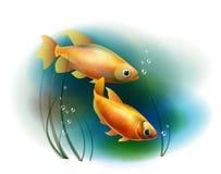 Goldfish στη θάλασσα ελεύθερη απεικόνιση δικαιώματος