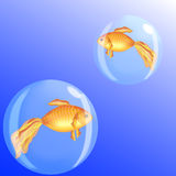 Goldfish στις φυσαλίδες διανυσματική απεικόνιση