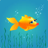 goldfish συμπαθητικός Στοκ Εικόνες