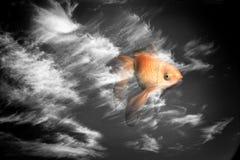 goldfish διανυσματική απεικόνιση