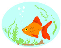 Goldfish. Royalty Free Stock Photography