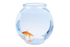 Goldfish Photos stock