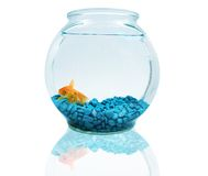 Goldfish. In bowl Royalty Free Stock Image