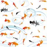Goldfish Fotografie Stock Libere da Diritti