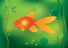Goldfish. Royalty Free Stock Photos