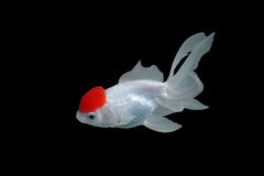 Goldfish fotografia stock