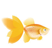 Goldfish stock de ilustración