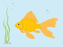 goldfish Стоковое Изображение