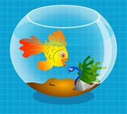 Goldfish Royalty Free Stock Photography