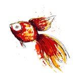 Goldfish Imagem de Stock
