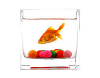 Goldfish. A goldfish swimming in a modern vase with a variety of colors of bubble gum Royalty Free Stock Image