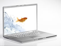 Goldfish. Jump out of the monitor Royalty Free Stock Photography