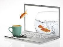 Goldfish. Jump out of the monitor Royalty Free Stock Photo
