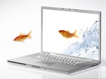 Goldfish. Jump out of the monitor Royalty Free Stock Images
