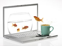 Goldfish. Jump in the monitor Royalty Free Stock Image